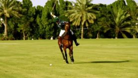 Polo News 15 (English)