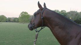 La Albertina Abu Dhabi – Horses