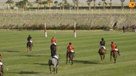 Mohanad El Afandy – Kings Polo Egypt